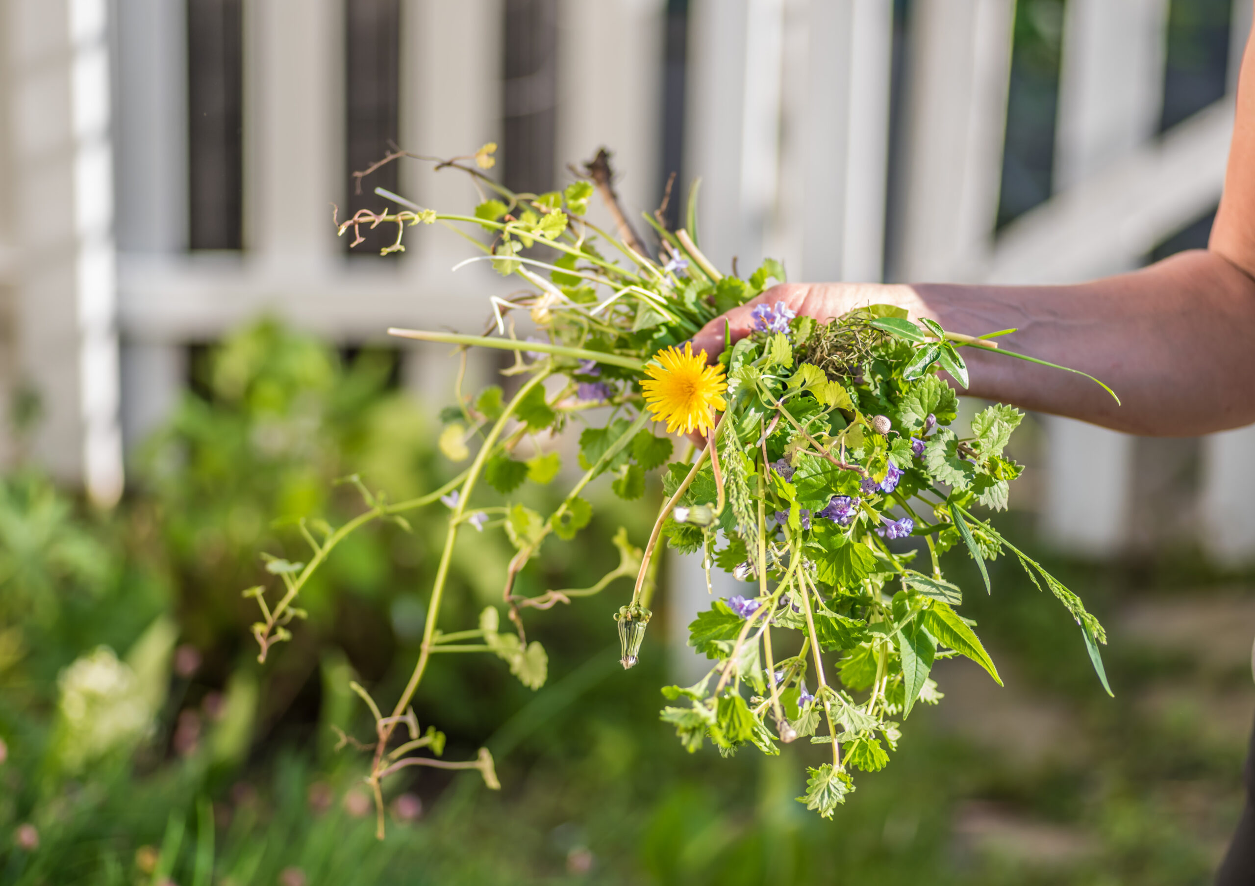 Grow your grass longer to prevent weeds