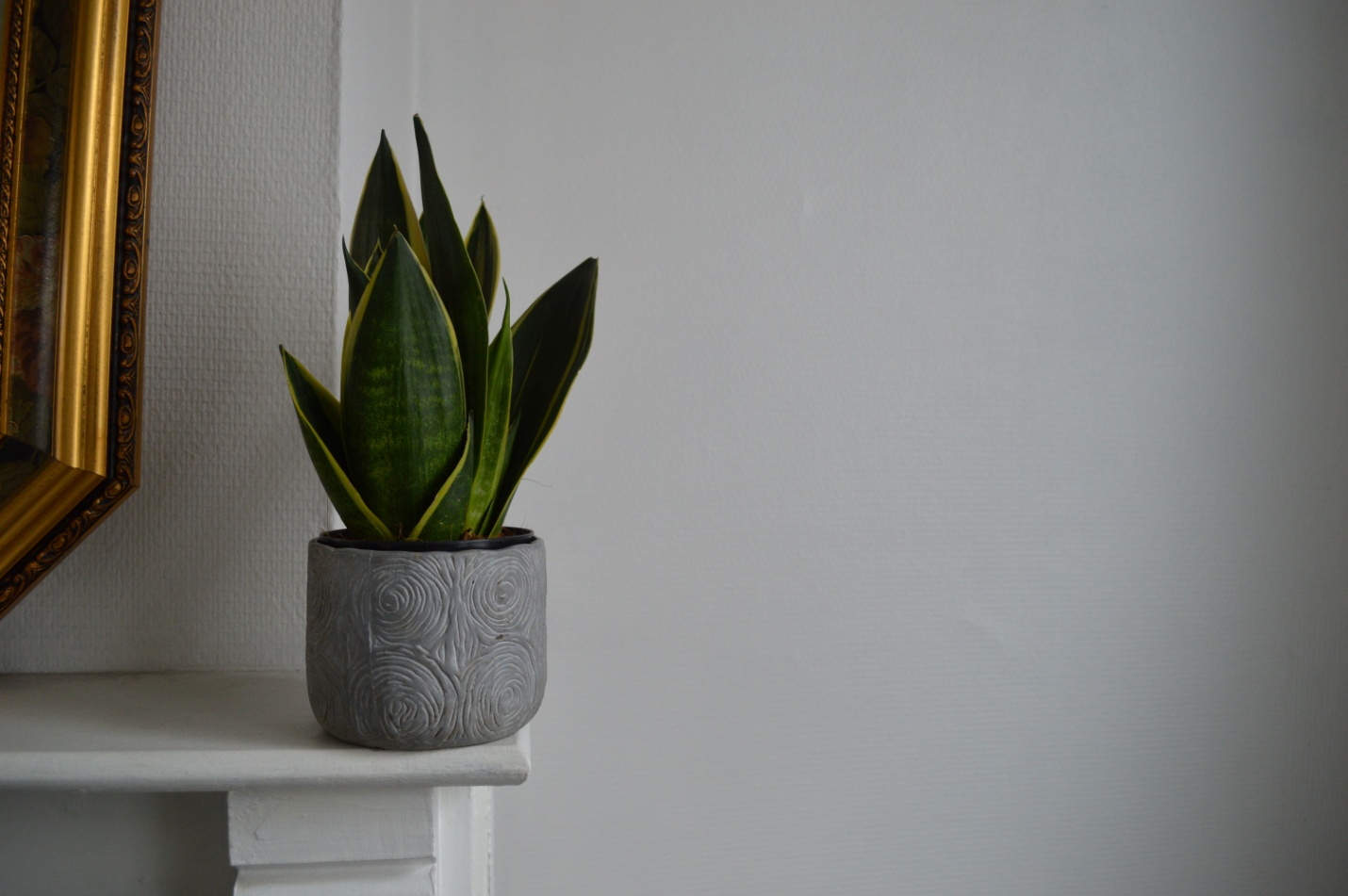 A guide on how to cultivate a snake plant