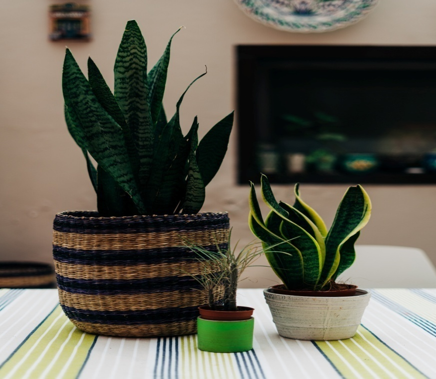 Making room for a snake plant